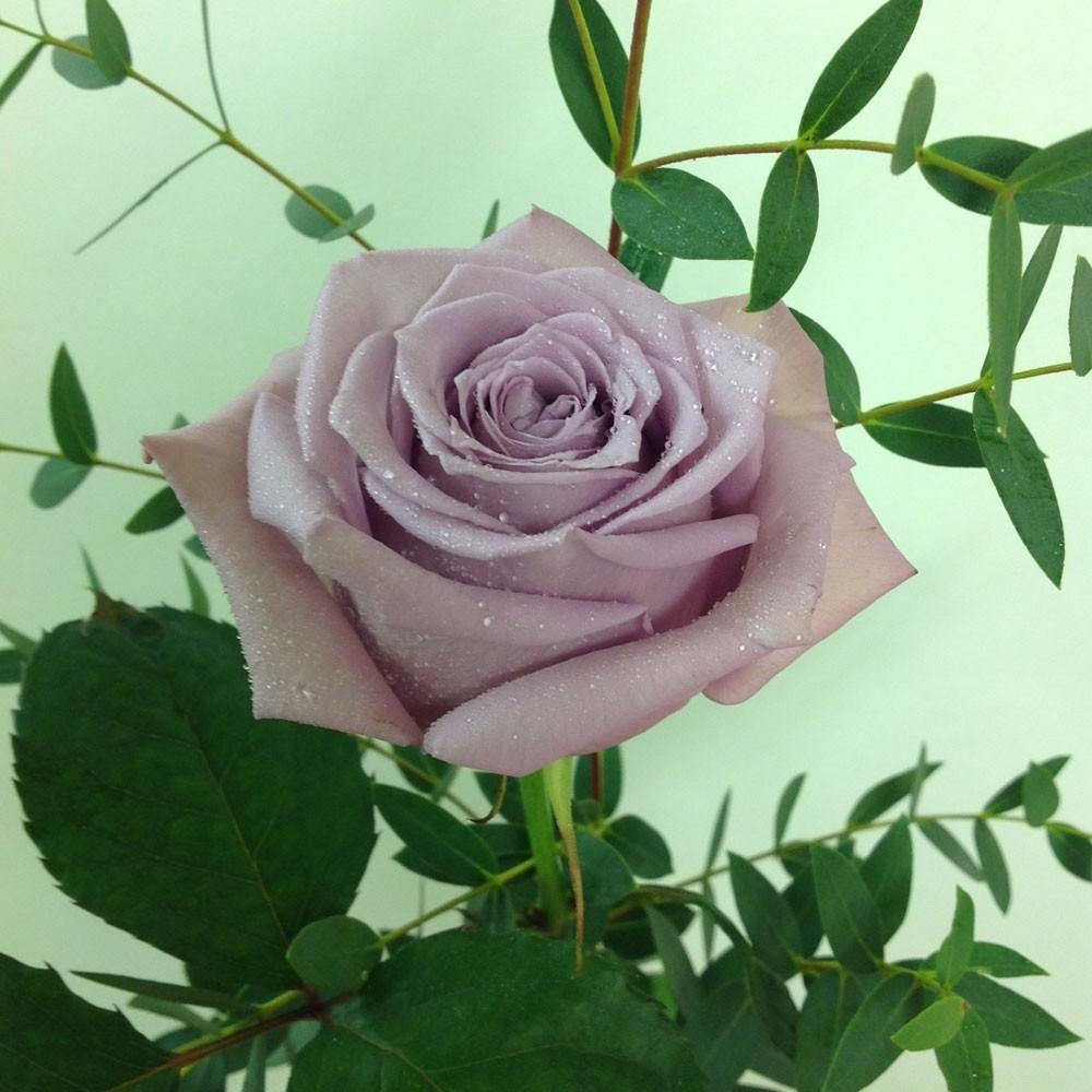 Single Vintage Armando Rose in Black Vase
