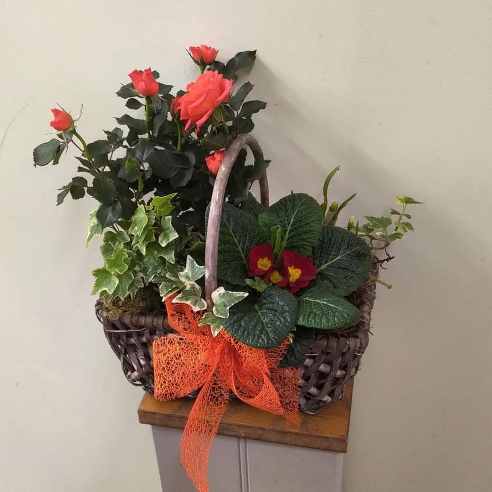 Primrose Planted Basket
