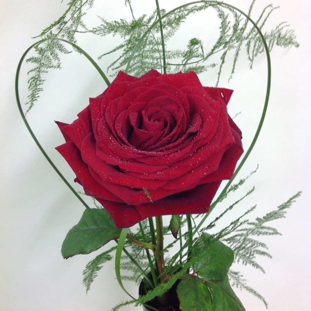 Single Red Rose in Black Vase