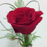 Single Red Freedom Rose