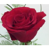 Half Dozen Red Freedom Roses